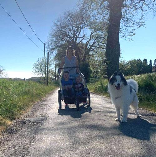 Sulki balade en carriole chiens de traineaux