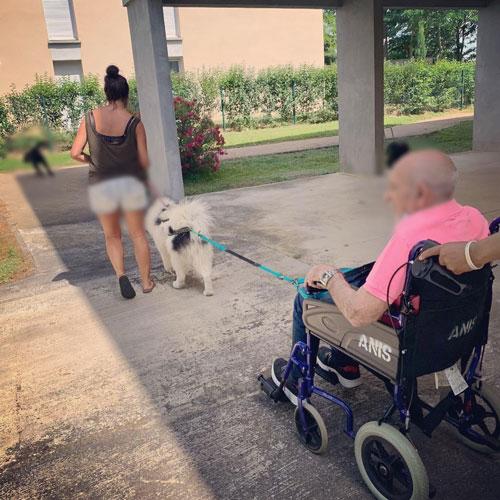 cani-fauteuil avec personnes âgée