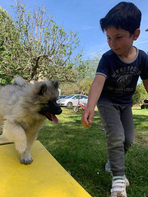 comment éduquer son chien ?