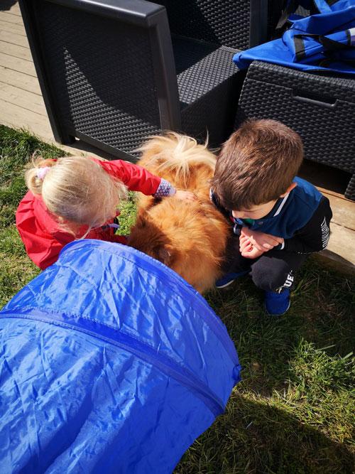 éducation du chien dans son envirronement