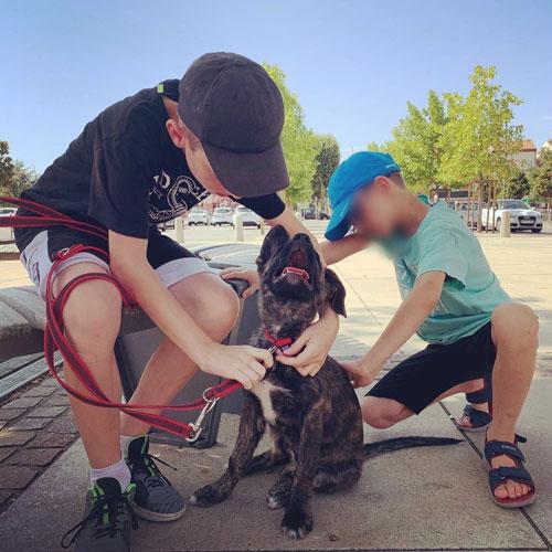 éducation du chien en famille