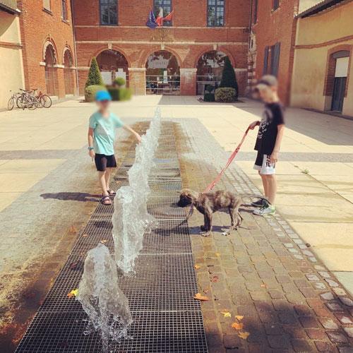 objectifs des séances d'éducation pour le chien